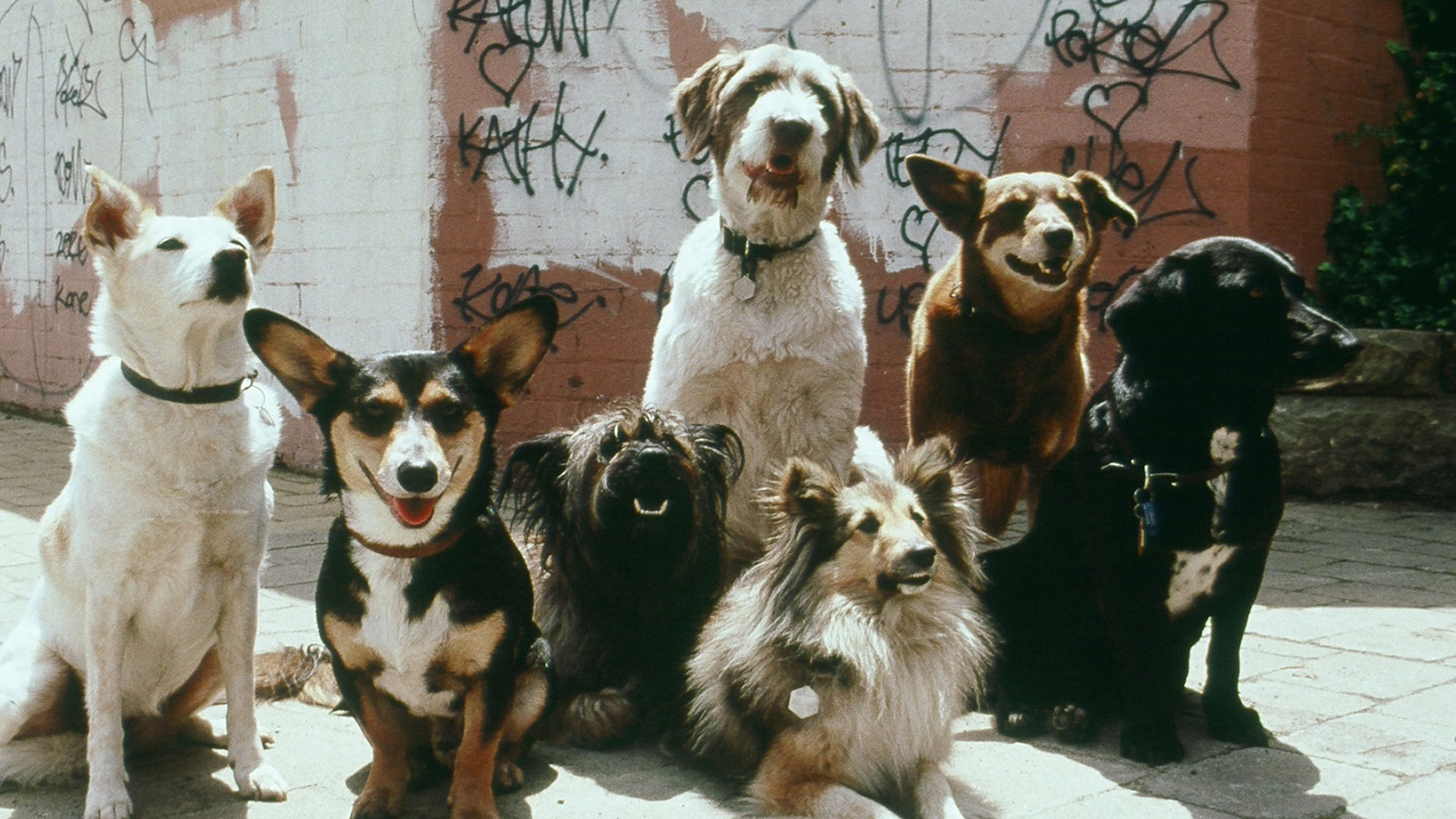 The Wonderful World of Dogs